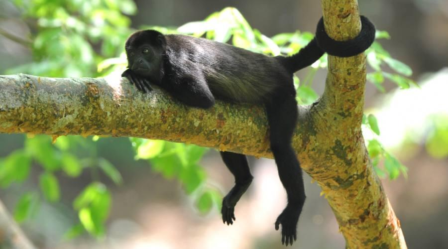 In Costa Rica anche le scimmia si rilassano!