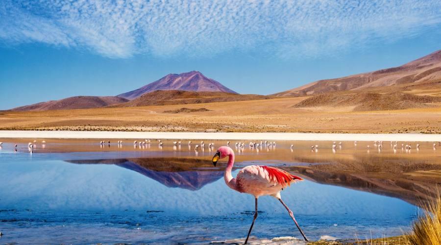 Laguna con fenicottero, Bolivia