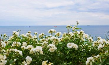 Il Festival delle Rose, colori e profumi ai piedi dei Balcani