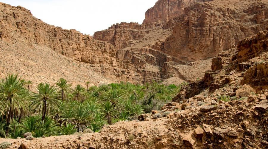 Oasi nella valle del Draa