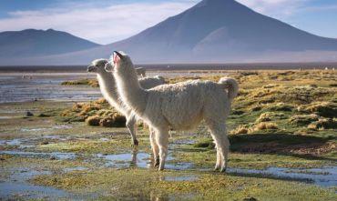 Formula Smart: Perù & Bolivia in 16 giorni