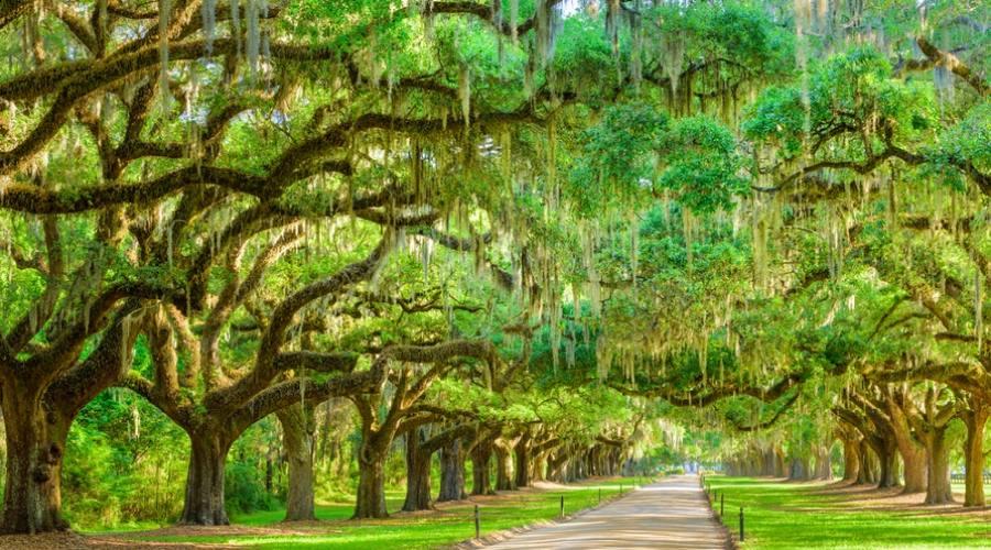 Piantagioni - Charleston