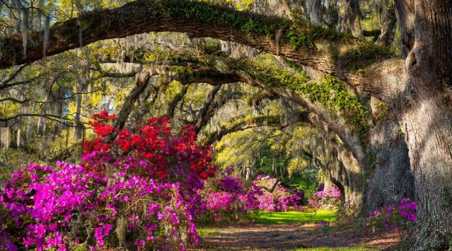 Magnolia Plantation and Gardens - Charleston