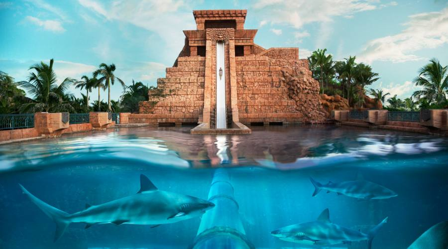 Attraversa la vasca degli squali!