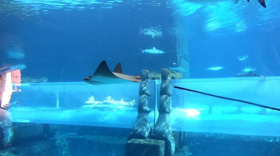 Passa dentro all'acquario degli squali con il tuo gommone