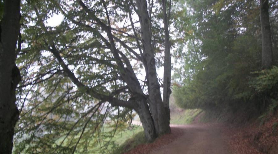 Sentiero dei Grandi Alberi