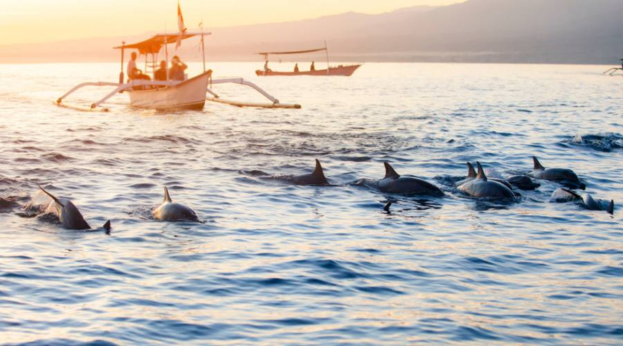 Avvistamento Delfini - Lovina Beach