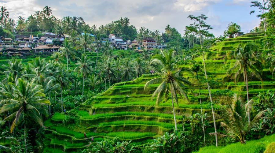 Risaie - Bali