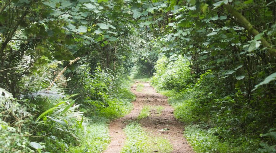 Foresta impenetrabile del Parco Nazionale di Bwindi