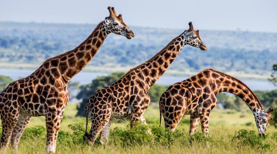 Safari fotografico nel Parco Nazionale del Lago Mburo