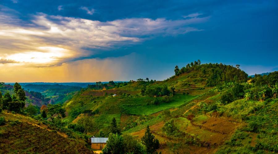 Parco Nazionale di Bwindi