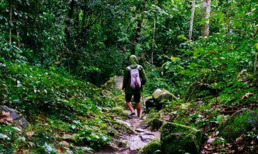 Tour : alla ricerca dei gorilla di montagna