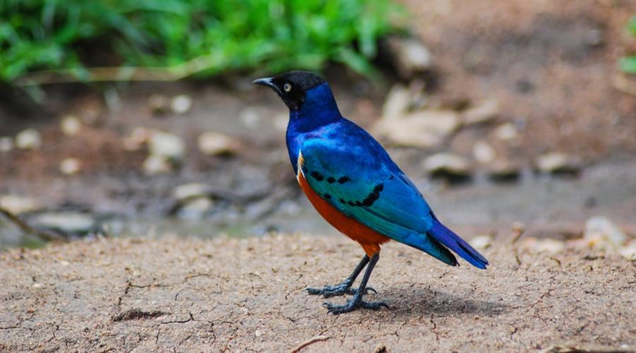 Safari - Hwange National Park