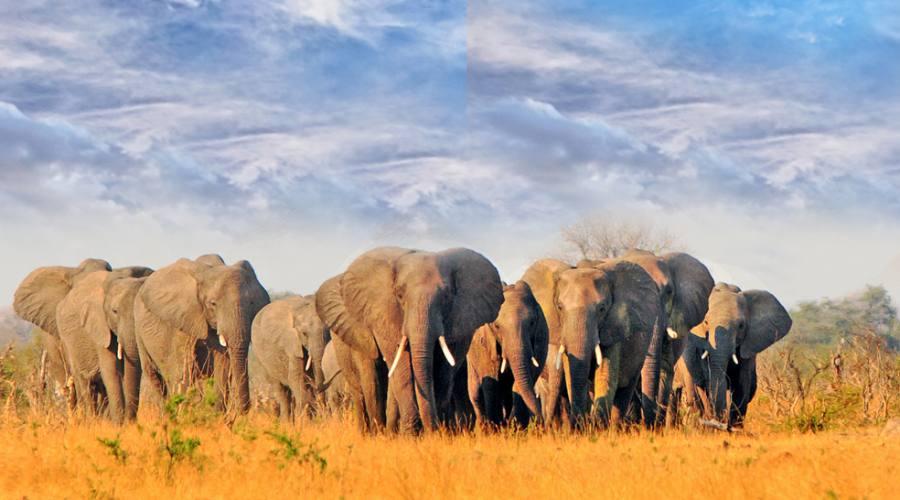 Elefanti - Hwange National Park