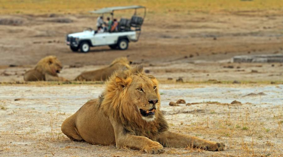 Leone - Hwange National Park