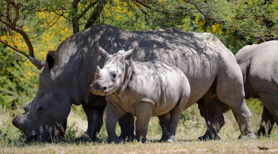 Rinoceronte - Hwange National Park