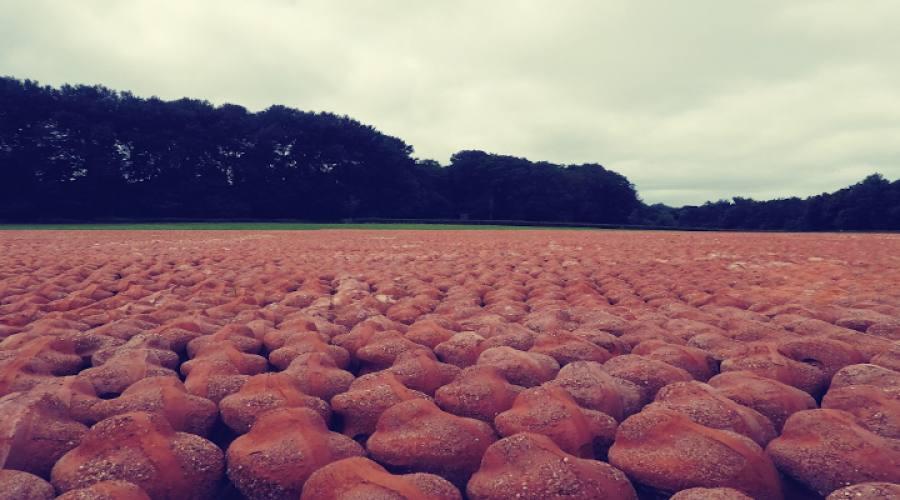 Ypres Memoriale di guerra fatto da centinaia di vasi di terracotta