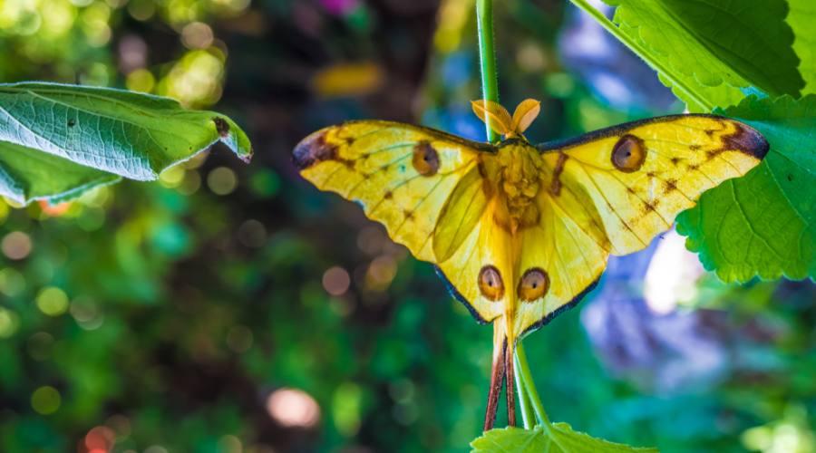 Ranomafana National Park - Farfalla