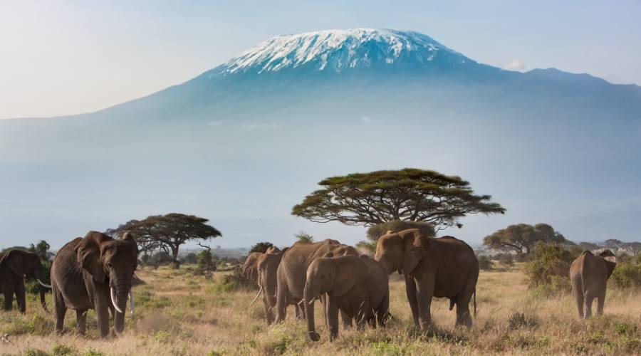 Amboseli National Park - Kilimangiaro