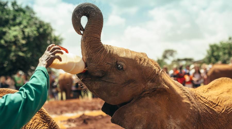 Nairobi National Park - cucciolo di elefante