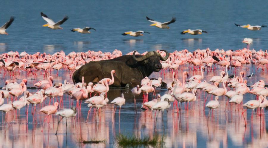 Nakuru National Park - Lago Nakuru