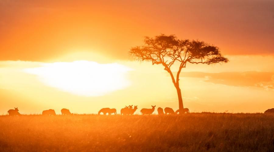 Maasai Mara - Game drive serale