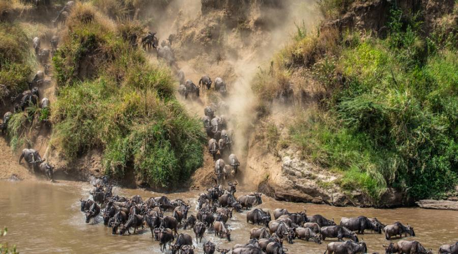 Maasai Mara - grandi migrazioni