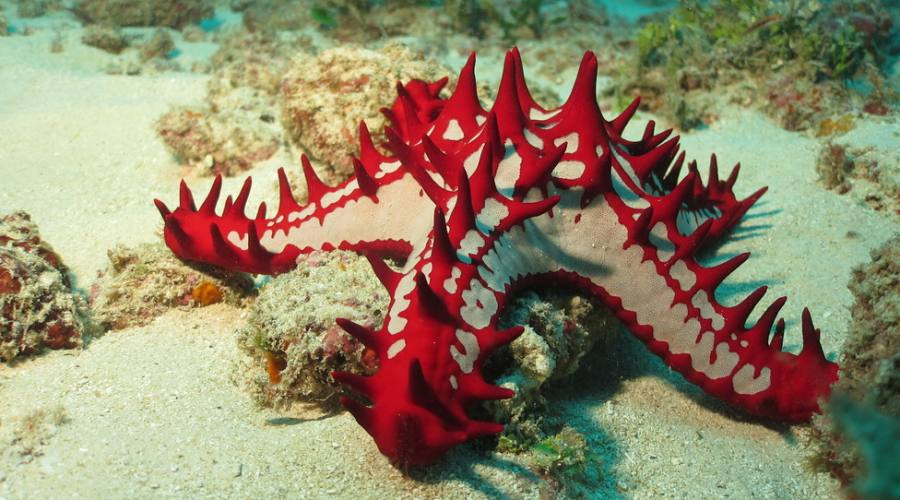 Diani - snorkeling