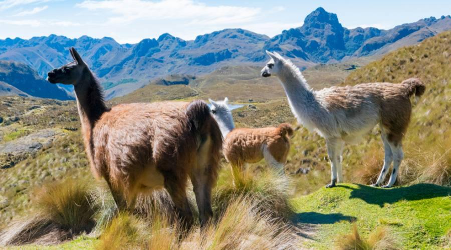 Parco Nazionale del Cajas