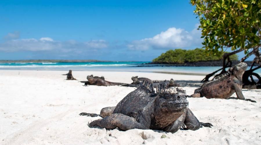 Isola Isabela - Iguane