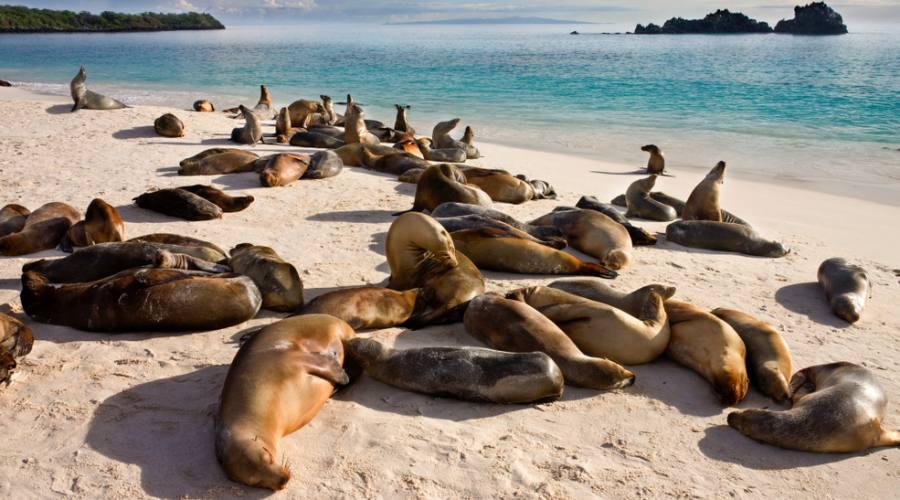 Isola Isabela - Leoni marini