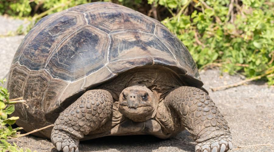 Isola Isabela - Centro protezione delle tartarughe