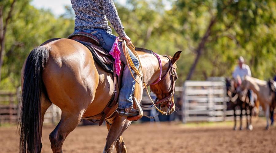 Cavallo al lavoro