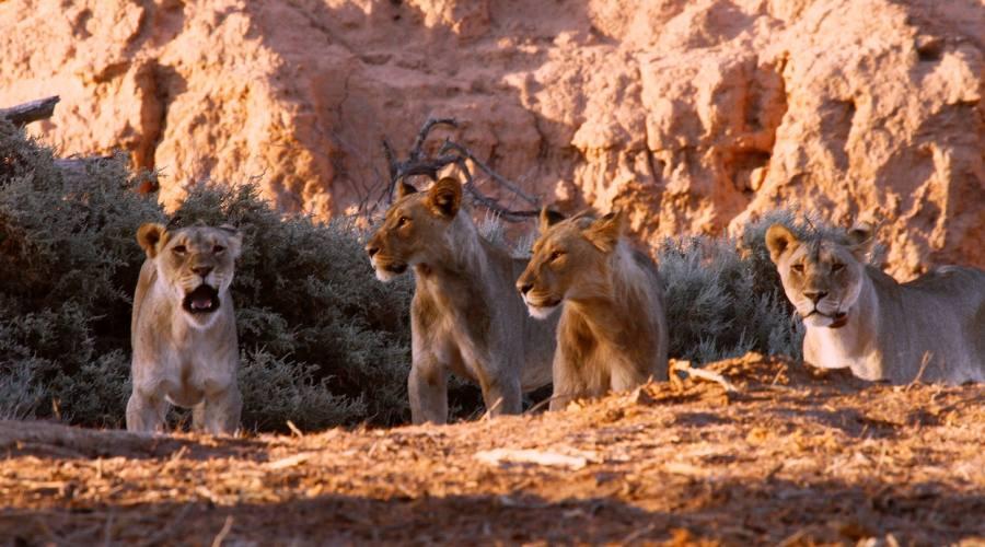 leoni del deserto uniab river