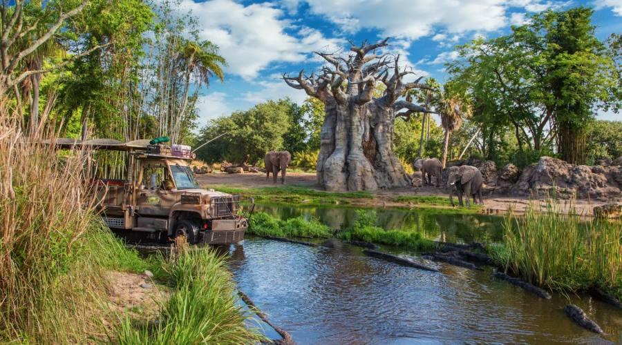 Partecipa ad un vero safari