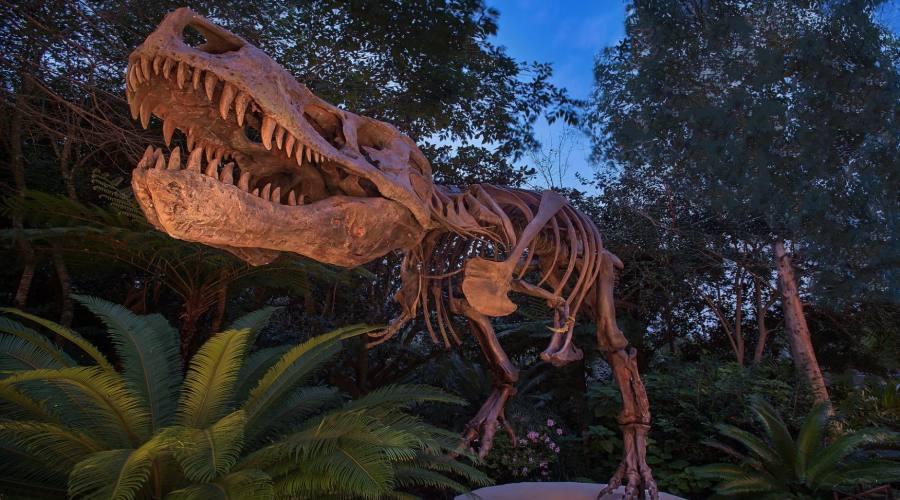 Il mondo dei dinosauri ti attende