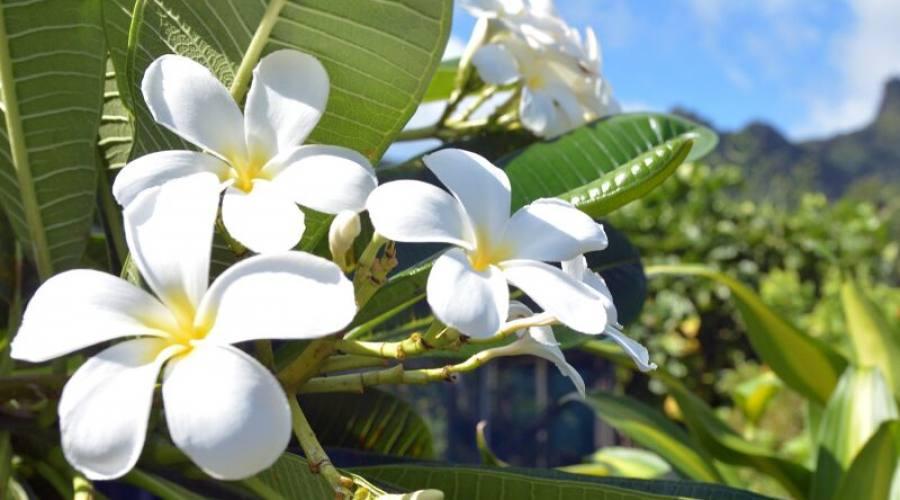 Fiore locale