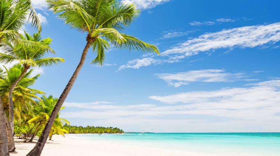 Palme da cocco sulla spiaggia di sabbia bianca di Punta Cana