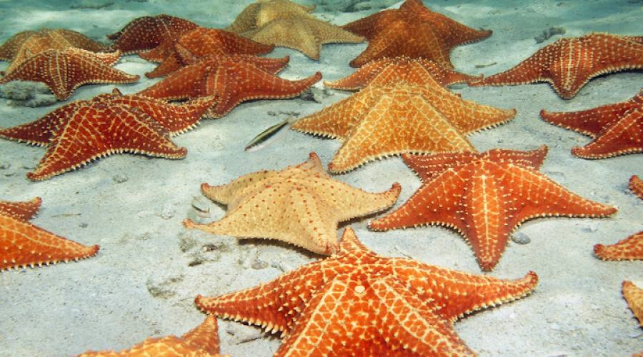 Stelle marine sul fondo marino