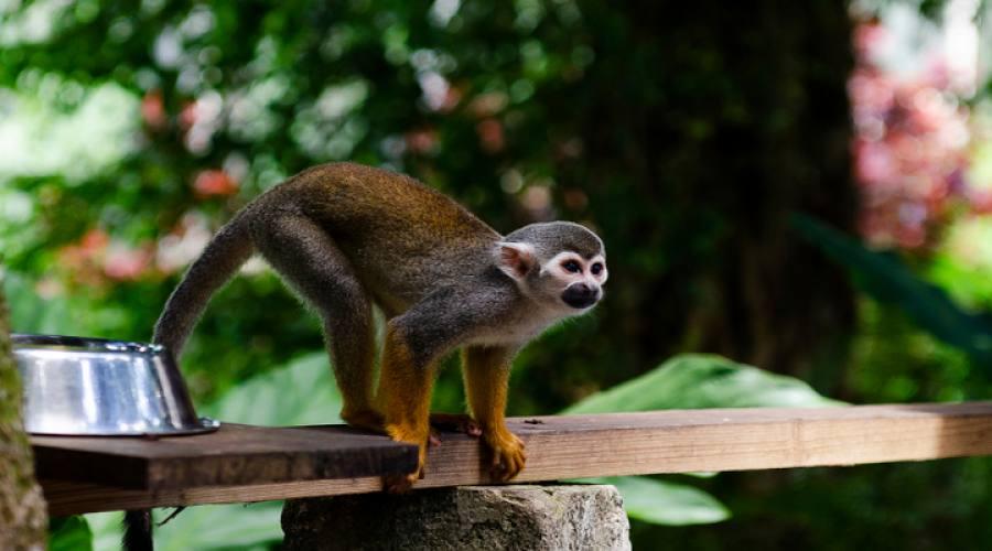 Scimmia della Repubblica Dominicana Punta Cana