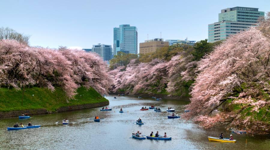 Tokyo in Primavera