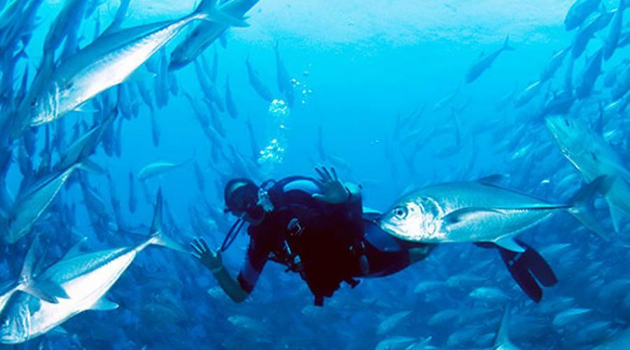 diving nel mare delle Laccadive