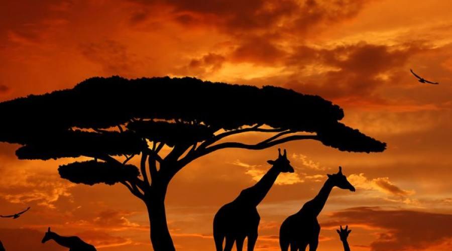 la magia del safari