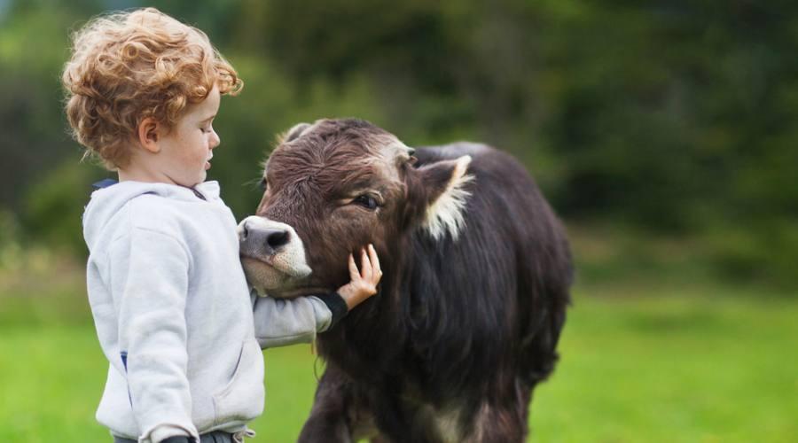 Bimbo con un vitellino
