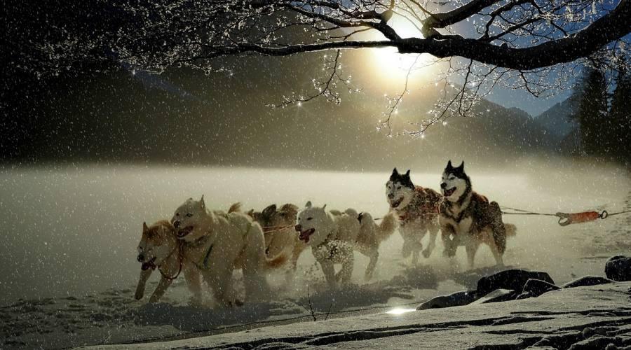 Giro con Huskies