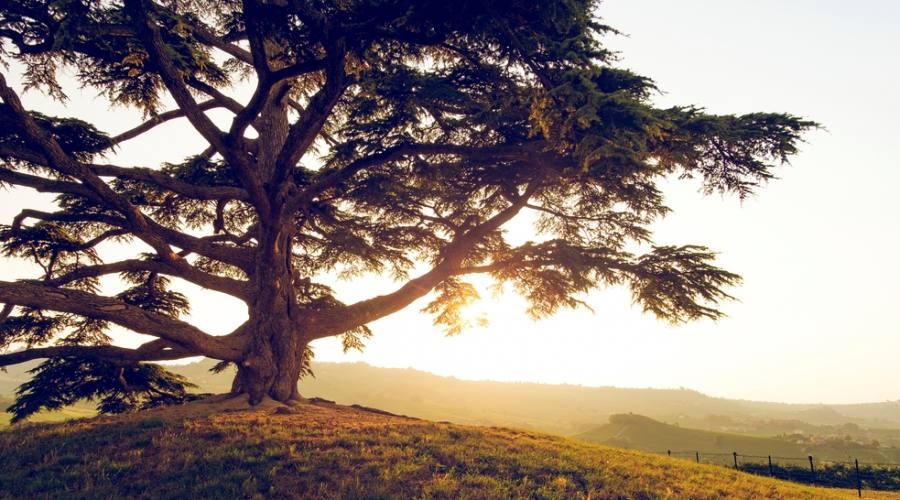 Valle dei Cedri Libano