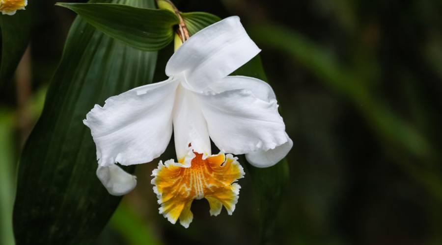 Una splendida orchidea