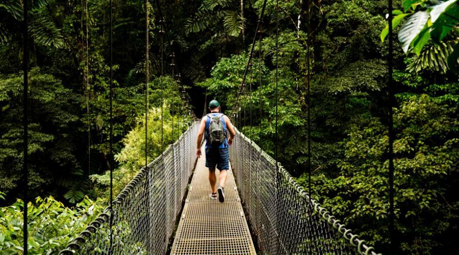 Ponte sospeso sulla volta della foresta