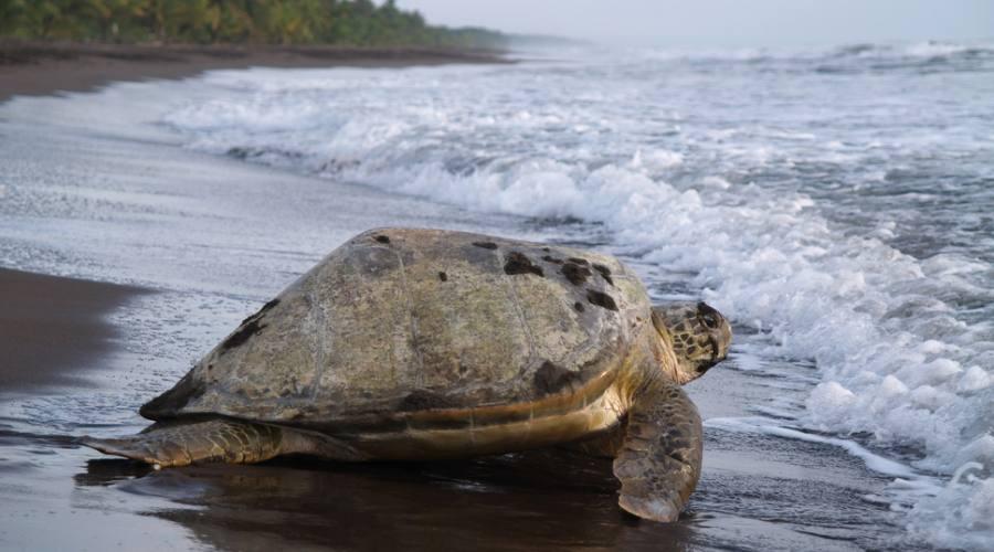 Parco nazionale Tortuguero