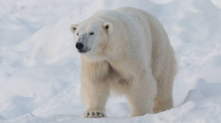 Zoo artico di Ranua